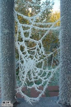 Frost crystals on a spiderweb...awesome!!!