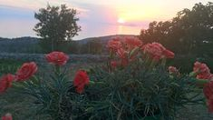Εμπνεύσεις-Δημιουργίες-Μεταμορφώσεις:  Εκείνες οι μάχες που έχουν σημασία δεν είναι αυτέ... Chios, Plants, Blog, Blogging, Plant, Planets