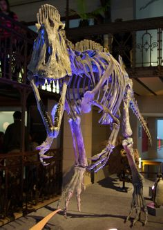 Cryolophosaurus_MDSNDB.jpg (2544×3586) - Museum des Sciences naturelles de Bruxelles. Dinosauria, Saurischia, Theropoda, Neotheropoda, Averostra, Tetanurae. Auteur : Philippe Berdalle / Flickr. 2007.