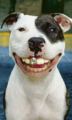 1000 Images About Doggie Bling On Pinterest Pet