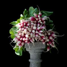 D'Avignon Radishes by Lynn Karlin - photograph, limited edition archival pigment print. For more information see MaineFarmlandTrustGallery.com