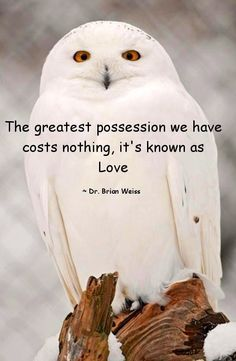 "Like and share!    Love Owl Stuff? Visit us: <a href=""http://mrowlie.com"" rel=""nofollow"" target=""_blank"">mrowlie.com</a> <a class=""pintag"" href=""/explore/owl/"" title=""#owl explore Pinterest"">#owl</a> <a class=""pintag searchlink"" data-query=""%23owlnecklaces"" data-type=""hashtag"" href=""/search/?q=%23owlnecklaces&rs=hashtag"" rel=""nofollow"" title=""#owlnecklaces search Pinterest"">#owlnecklaces</a>…"