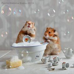 dishwashing by Elena Eremina on 500px