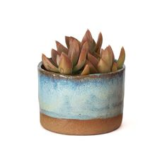 Ceramic Planter (Multiple Colors)