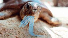 Acht Milliarden Plastiktüten werden europaweit pro Jahr achtlos in der Natur entsorgt. Sie verschandeln nicht nur Landschaft und Gewässer, für die Meeresbewohner wie Seevögel, Robben, Meeresschildkröten und Wale ist unser Wohlstandsmüll sogar tödlich. Bitte unterzeichnen Sie unsere Petition gegen Plastiktüten an die EU: https://www.regenwald.org/aktion/935/aktion-stoppt-die-plastiktueten