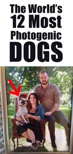 How they even took these pictures, I don't know!!! http://theilovedogssite.com/the-worlds-12-most-photogenic-dogs-how-they-took-these-pictures-i-dont-even-know/