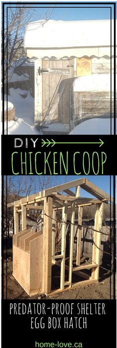 DIY Chicken Coop - Upcycled Fenceboards - Home Love