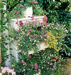 Add an element of surprise by recycling old furniture. Here, a profusion of flowers, including Santa Barbara daisies and the occasional pansy, spills from a dresser drawer that now holds soil instead of socks.