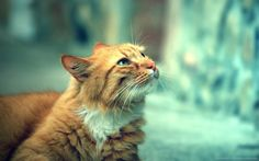 25 High Quality Cat Wallpapers 2015-2016