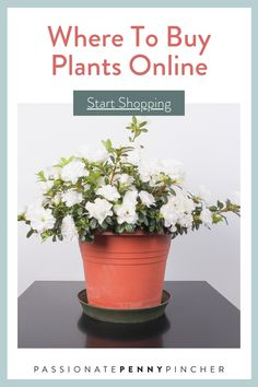 Are you wondering where to buy plants online? Here are a few good options for flowers and live plants when you can't get to the garden store. Diy Garden Projects, Garden Tips, Planting Bulbs, Planting Flowers, Cheap Plants Online, Drift Roses, Plants Delivered, Wildflower Seeds