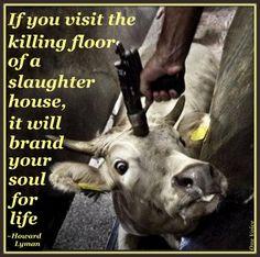 Killing animals In Slaughterhouse - Visit in slaughterhouse