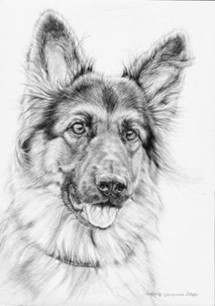 Ideas Dogs Art Painting German Shepherds For 2019 Animal Sketches, Animal Drawings, Pencil Drawings, Art Sketches, Art Drawings, Drawings Of Dogs, Graffiti Kunst, Dog Paintings, German Shepherd Dogs