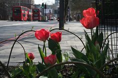 Chelsea Fringe: A 'pimped pavement' created by guerrilla gardener Richard Reynolds. Unplanned design, 'found' plants