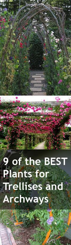 9 of the best plants for arbors trellises and archways - Garden Trellises