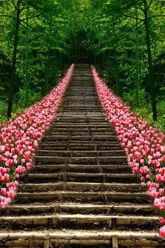 Pink Tulips lining walkway - this would also be a cute idea for an outdoor wedding at home
