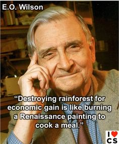 ~ E.O. Wilson. Destroying rainforest for economic gain is like burning a Renaissance painting to cook a meal.