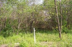 #Dane County, Wisconsin Land for sale; Farmland, Vacant Lots, Large Acreage, Waterfront Lots and more... http://idxwi.thelandman.net/i/Dane_County_Wisconsin_Land_for_Sale
