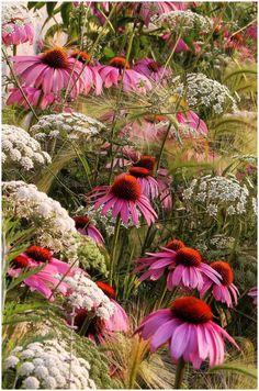 Prairie Planting, Prairie Garden, Garden Pictures, Garden Photos, Most Beautiful Gardens, Beautiful Flowers, Simply Beautiful, Jardim Natural, Culture D'herbes