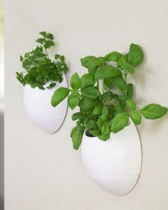 The Eco Pod - Self Watering Herb Pot will help you turn your black thumb into a green one for good. Once you install this set of two gardening gifts on the wall, your herbs and plants will be self watered