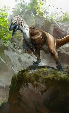 Raptor on a rock.