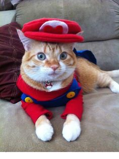 28 Halloween Costumes For Cats That Will Put A Smile On Your Face image Super Mario Cat Halloween Costume.png