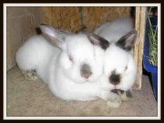 Udi & Marshmallow #bunny #rabbit #rescue #gainesville