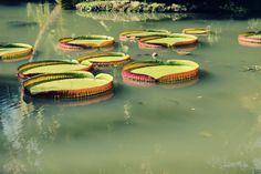 Jardim Botânico - Rio - Brazil Photo: Grazy Pacheco