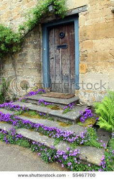 English cottage. Campanula growing between the steps