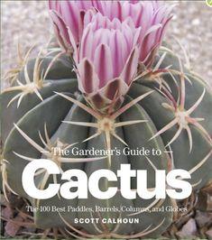 Debra Lee Baldwin S Succulent Blog Cactus Online Planting Succulents Garden Plants Planters