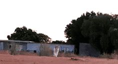 cats scared lol attack running omg wtf animals chasing suprise funny catch gif gifs - Find and share funny GIFs on GIFsme