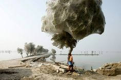 The cocooned trees have been a side-effect of spiders escaping flood waters in the area.  Photo by Russell Watkins