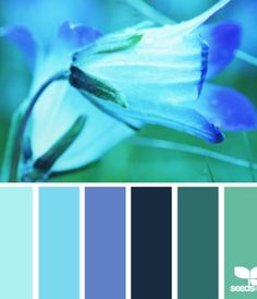 flora blue