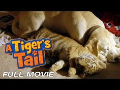 A Tiger's Tail - Family Dog & Baby Tiger Movie - YouTube
