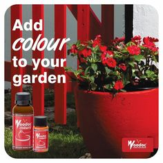 Woodoc Colours can be added to a Woodoc Sealer of your choice (indoor or exterior) but can also be added to a Woodoc Tile and Cement Sealer. Stain Colors, Colours, Design Development, Cement, Tile, Stains, Indoor, Exterior, Bright