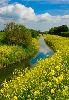 quiet stream surrounded by fields of flowers