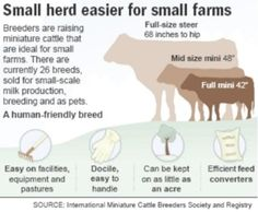Article on mini cattle breeds...because I love cows, but I am tiny and would be stomped on easily.  D:>