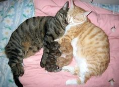 Colored coordinated kitty family.