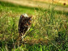 Un gato precioso