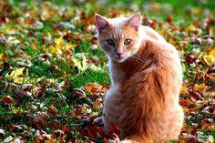 "Beautiful cat! ""MoDot"""