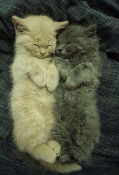 awwww little kitties:)