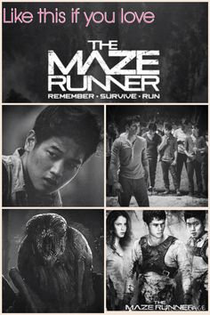 Like if you love the maze runner! Share if you love the Maze Runner trylogy! Maze Runner Funny, Maze Runner The Scorch, Maze Runner Movie, Maze Runner Trilogy, Maze Runner Series, Love Movie, I Movie, James Dashner, Maximum Ride