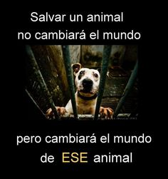 Quien salva un animal salva al Mundo