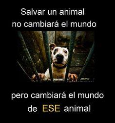 Quien salva un animal salva al Mundo