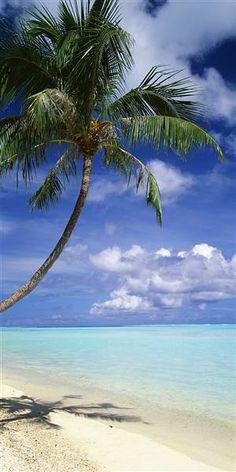 Palm Tree Bora Bora French Polynesia