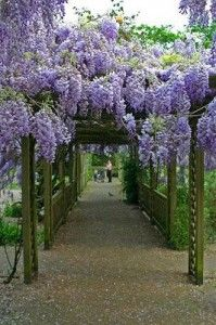 Pergola with flowers, perfect for afternoon reading