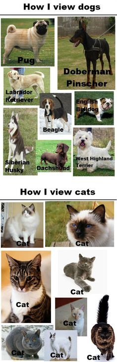 It's sad because I'm a vet tech... but it's so true!!!! (one of my classes even taught and tested me on cat breeds)