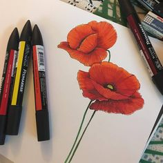 Poppy/Papaver/Mak with Promarkers. Author: Magdalena Biedermann https://www.flickr.com/photos/154882700@N03/albums/with/72157681050433594