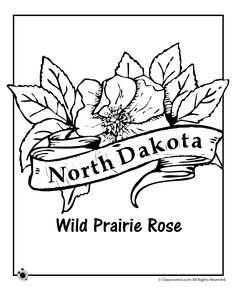 state flower coloring pages north dakota state flower coloring page classroom jr