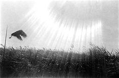 Xushima - Zofia Chomętowska, Stork in the Sun, 1929 Long Way Home, Monochrome Photography, Stork, Wilderness, Leica, Sky, Outdoor, Beautiful, Masters
