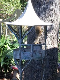 Mr. Squirrel is sizing up the bird feeder. You might also spy some red spotted concrete mushrooms in the background. I love it when a garden wears whimsy well.   Call us at (903) 597-7421 Online at www.breedlovelandscape.com  #whimsy #birdfeeder #mushrooms  #breedlovelandscape   #landscapearchitecture #landscape #architecture #tylertx #tylertexas #tyler #texas